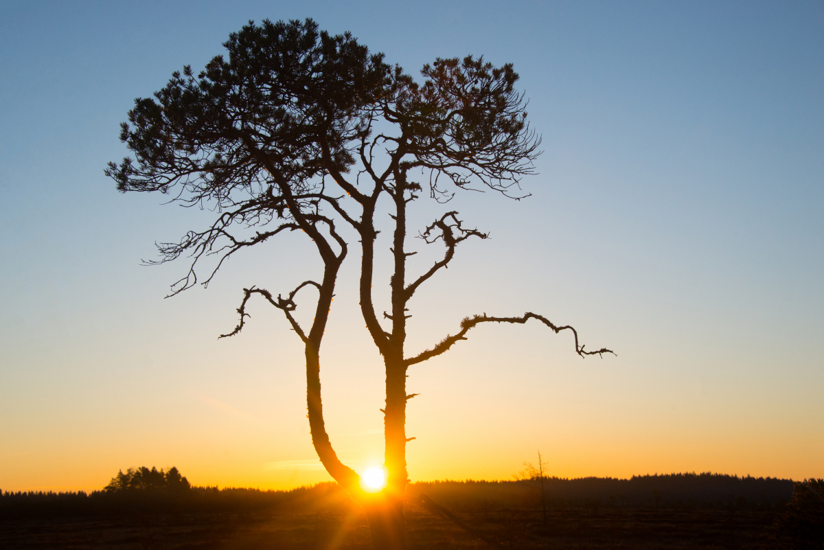 my-sunrise-tree-1.jpg